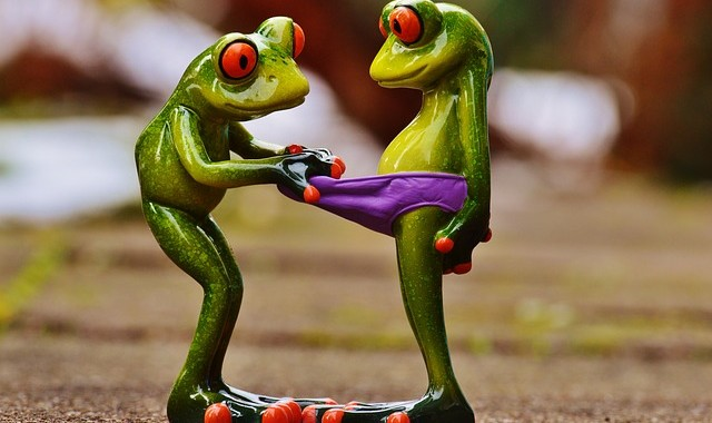 frogs-1158958_640